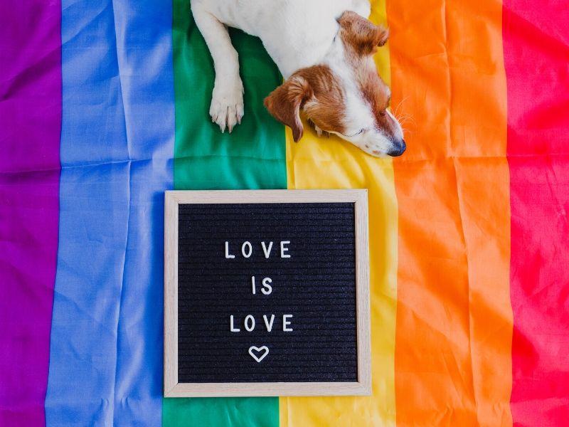 Nie ma miejsce na LGBT w kampanii Biedroń 2020 (fot. canva.com)